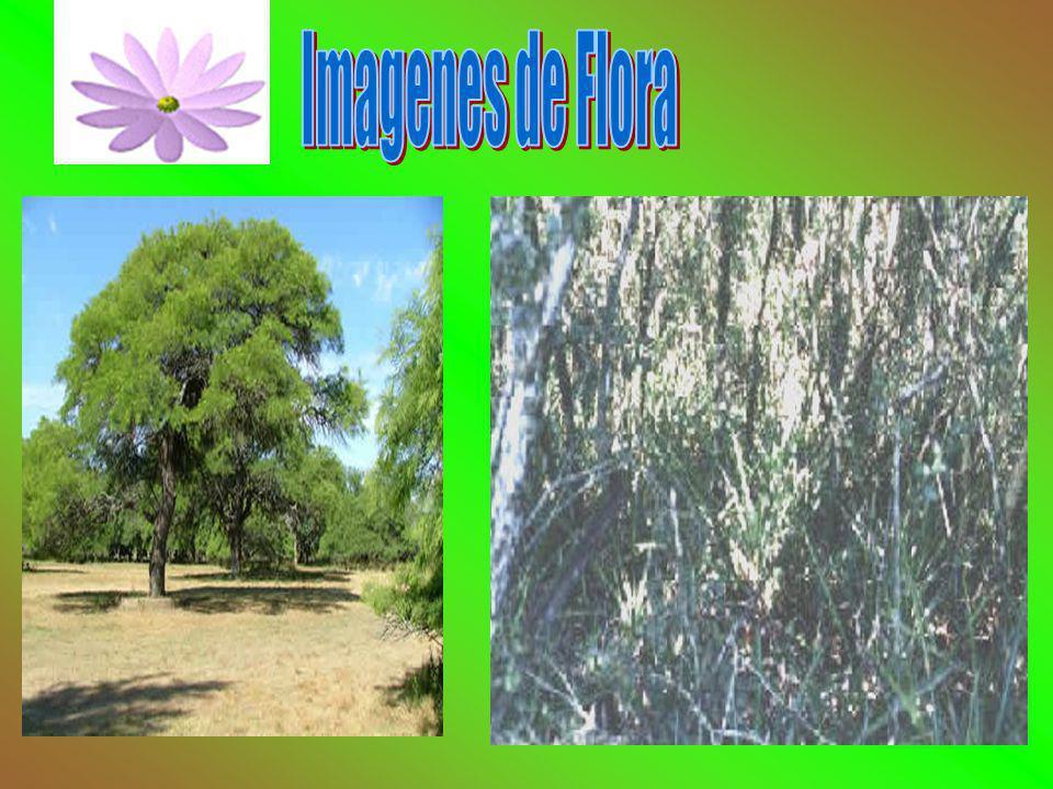Distintas corrientes florísticas. Especies orígenes diversos. Representan un ambiente de particular interés. Quebracho, especie arbórea dominante. Veg