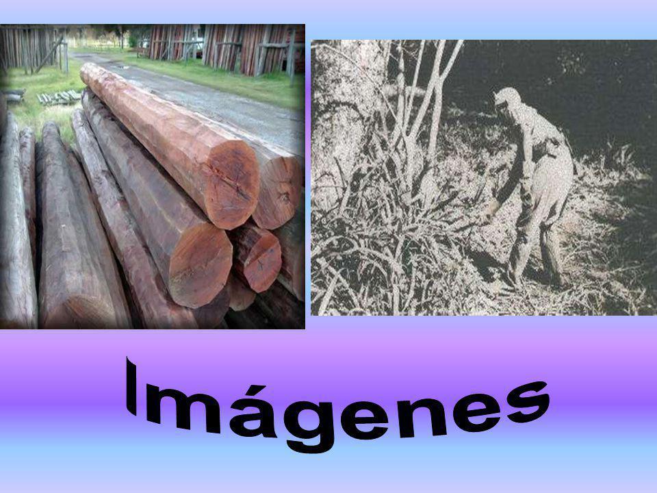 Muy explotado y modificado. Especies: alto valor comercial. Quebrachos: maderas duras y nido de tanino. Muy superior a tasas de renovación, desaparici