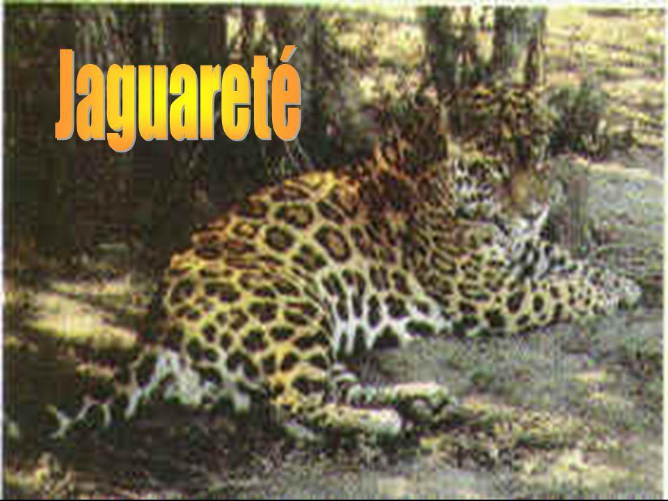 Pecarí, Jaguareté, Aguará Guazú, Puma, Tapir, Oso Hormiguero, Gato Onza, Tatú Carreta, Ciervo de los Pantanos. Aves: Chajá, Charata, Loro, Paloma de M