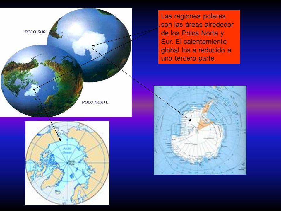 Las regiones polares son las áreas alrededor de los Polos Norte y Sur. El calentamiento global los a reducido a una tercera parte.