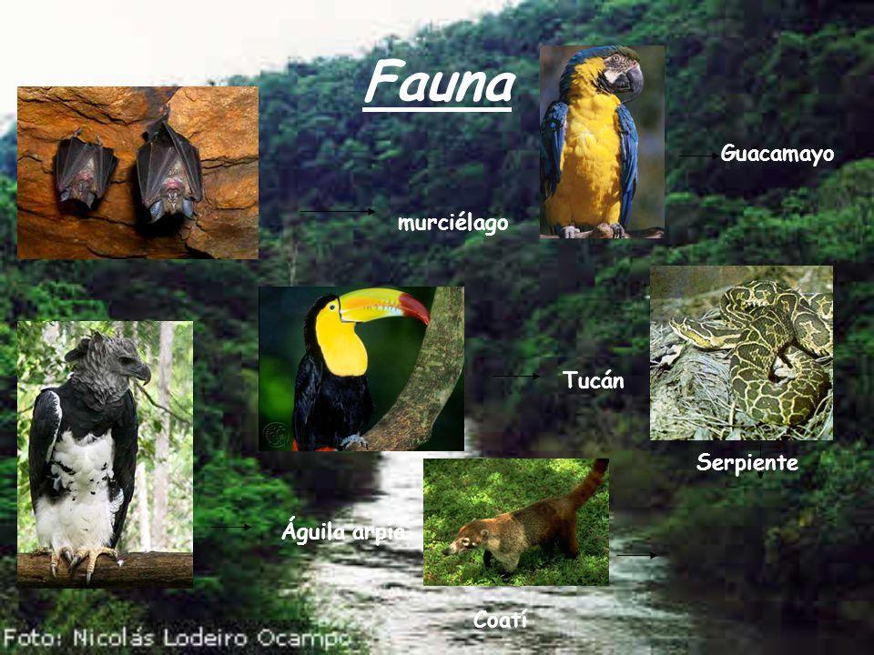 Fauna murciélago Guacamayo Águila arpía Tucán Coatí Serpiente
