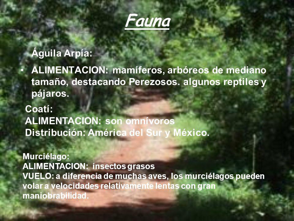 Fauna Águila Arpía: ALIMENTACION: mamíferos, arbóreos de mediano tamaño, destacando Perezosos. algunos reptiles y pájaros. Coatí: ALIMENTACION: son om