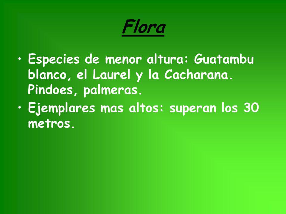 Flora Especies de menor altura: Guatambu blanco, el Laurel y la Cacharana. Pindoes, palmeras. Ejemplares mas altos: superan los 30 metros.