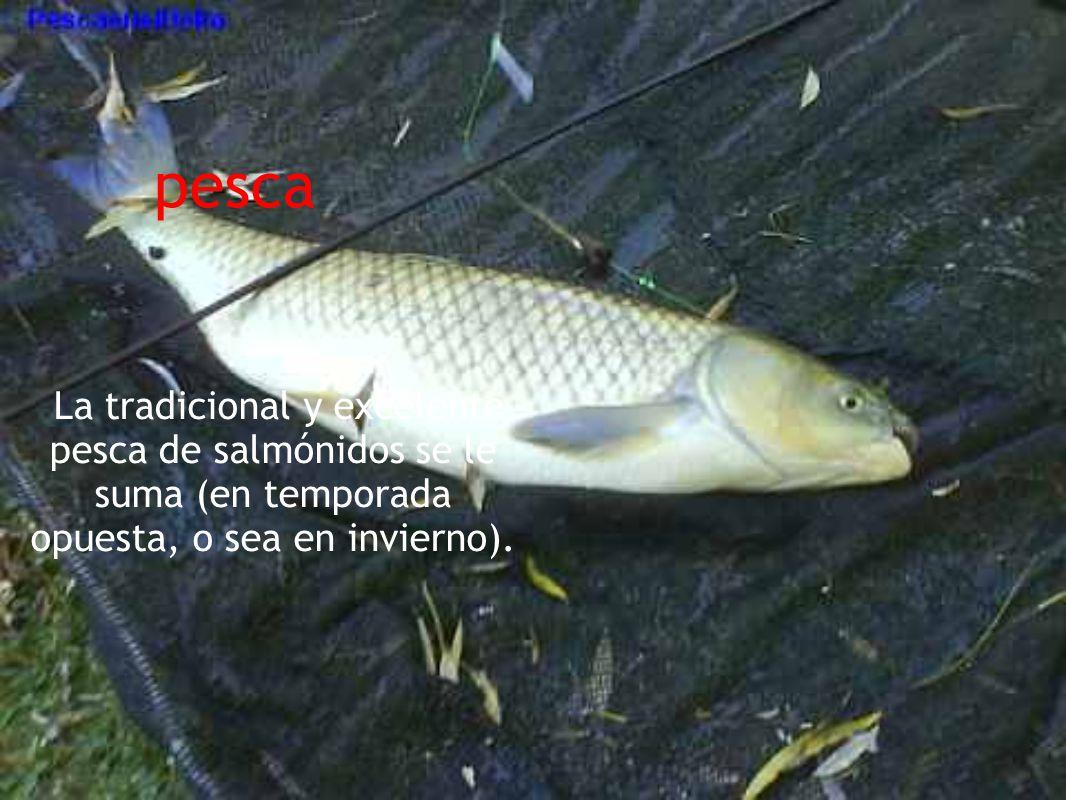 pesca La tradicional y excelente pesca de salmónidos se le suma (en temporada opuesta, o sea en invierno).
