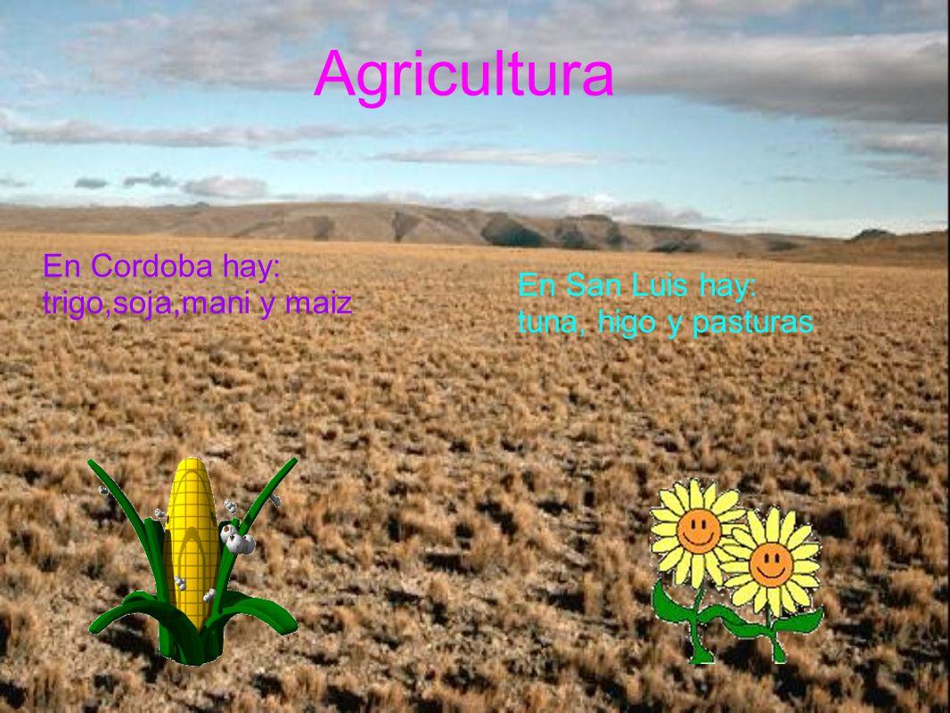 Agricultura En Cordoba hay: trigo,soja,mani y maiz En San Luis hay: tuna, higo y pasturas