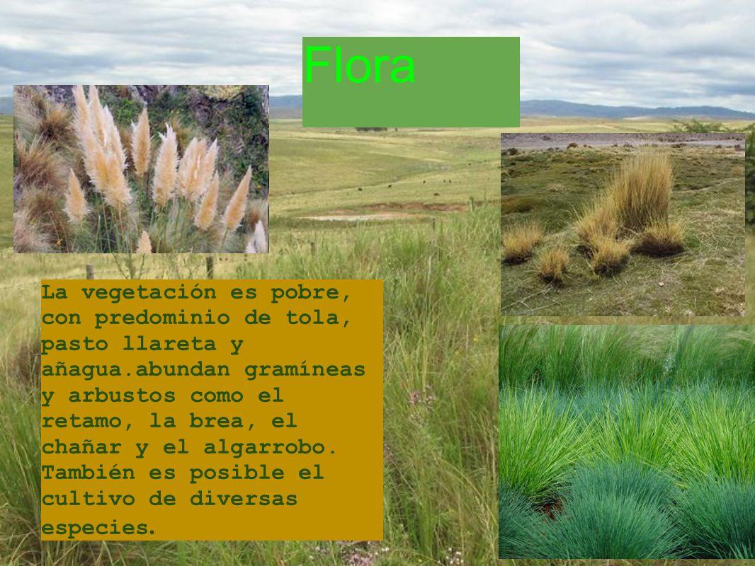 La vegetación es pobre, con predominio de tola, pasto llareta y añagua.abundan gramíneas y arbustos como el retamo, la brea, el chañar y el algarrobo.