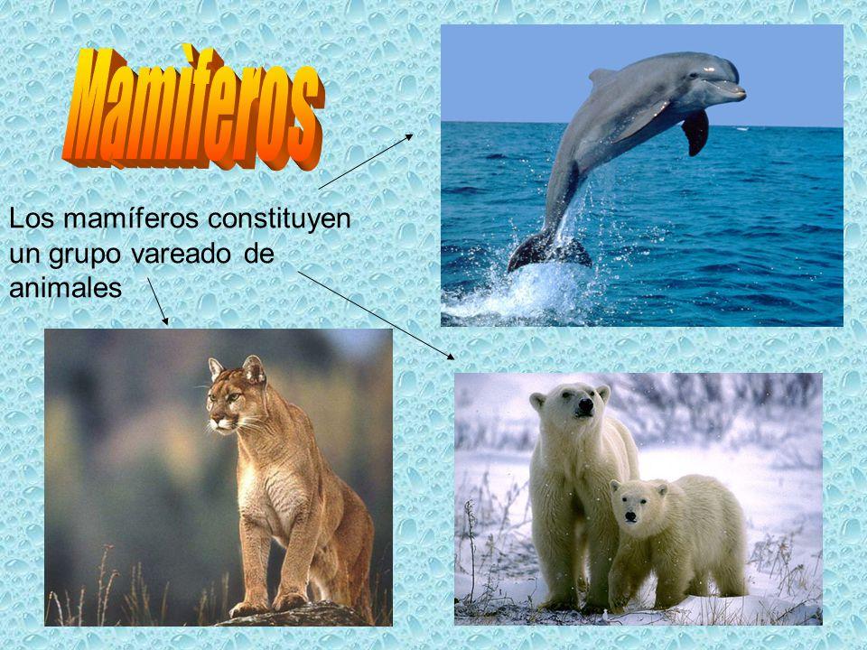 Los mamíferos constituyen un grupo vareado de animales