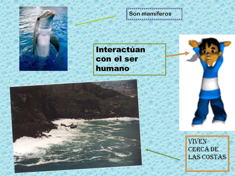 Viven cerca de las costas Interactúan con el ser humano Son mamíferos