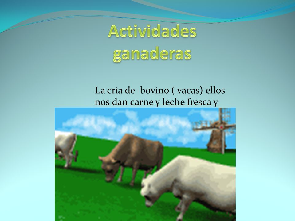 La cria de bovino ( vacas) ellos nos dan carne y leche fresca y pura.