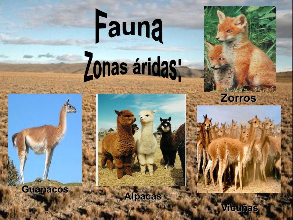 Zorros Guanacos Alpacas Vicuñas