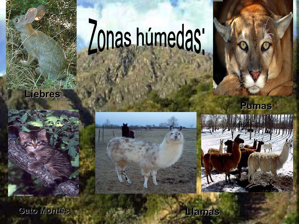 Lo que más atrae al turismo en las Sierras Pampeanas es la naturaleza.