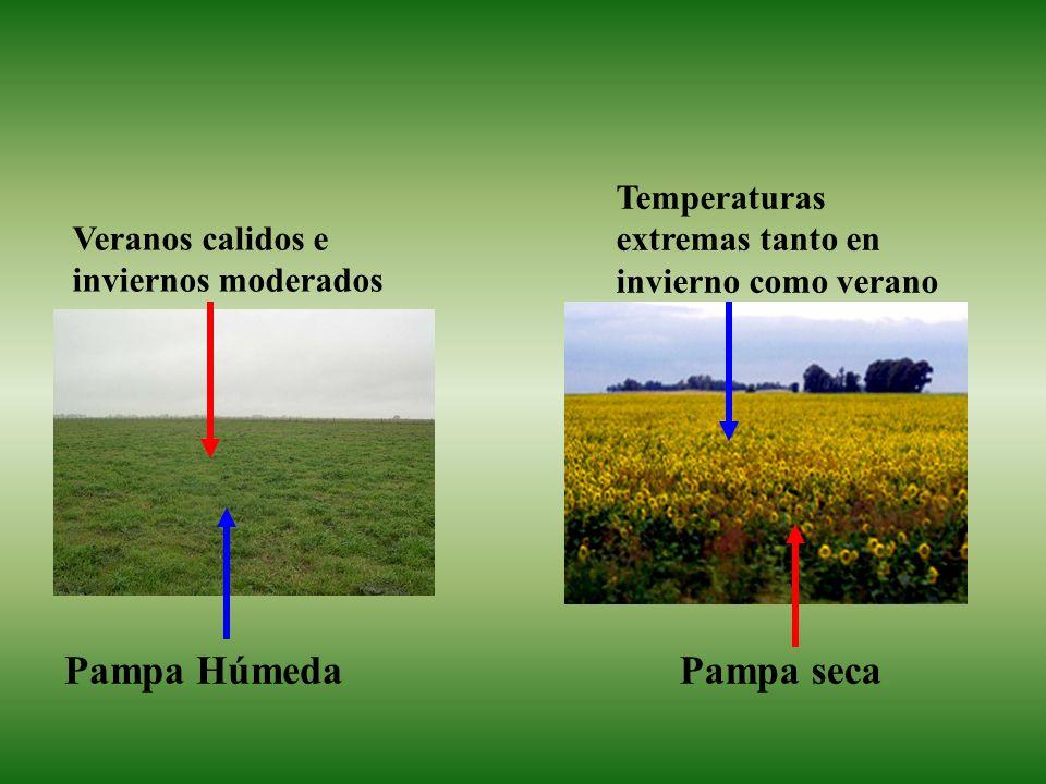 Pampa HúmedaPampa seca Veranos calidos e inviernos moderados Temperaturas extremas tanto en invierno como verano
