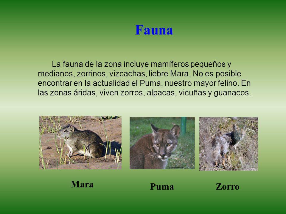 La fauna de la zona incluye mamíferos pequeños y medianos, zorrinos, vizcachas, liebre Mara.