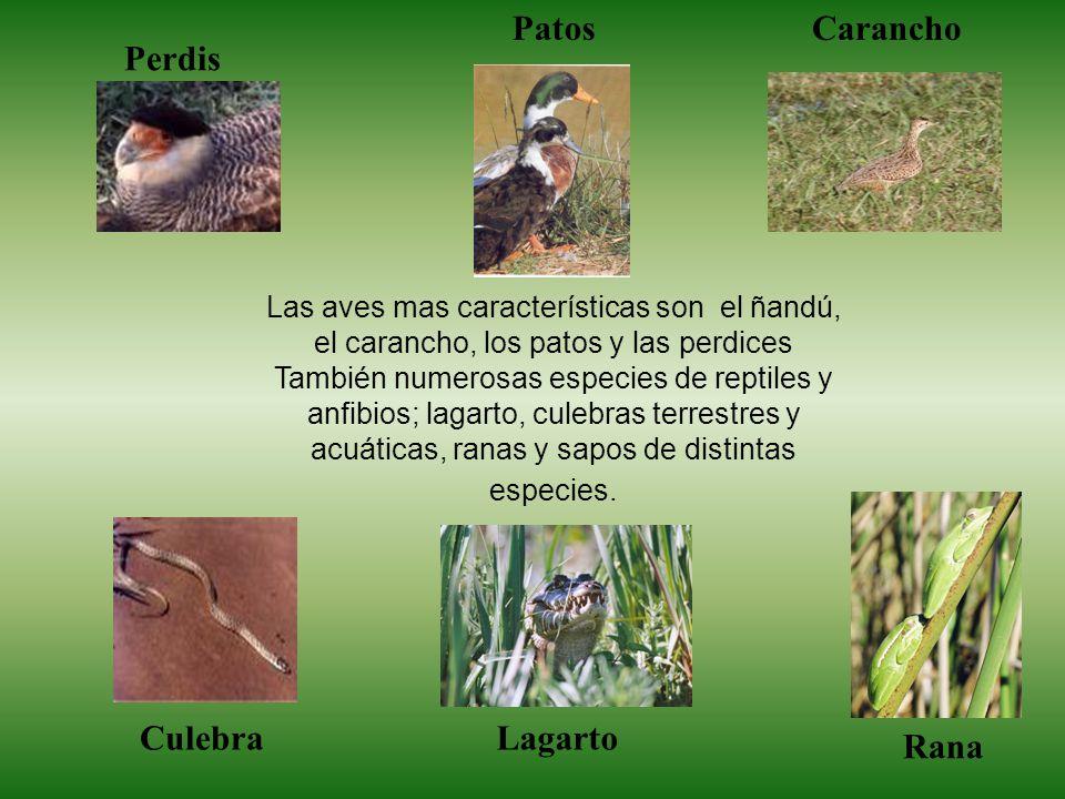 Las aves mas características son el ñandú, el carancho, los patos y las perdices También numerosas especies de reptiles y anfibios; lagarto, culebras terrestres y acuáticas, ranas y sapos de distintas especies.