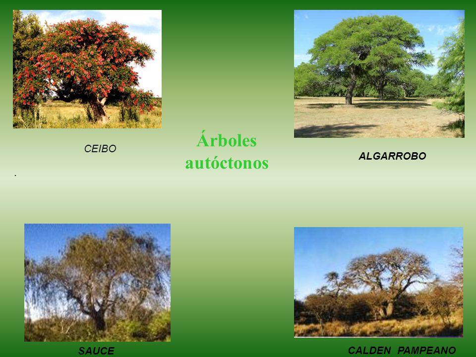 . Árboles autóctonos ALGARROBO Sauce CALDEN PAMPEANO CEIBO SAUCE