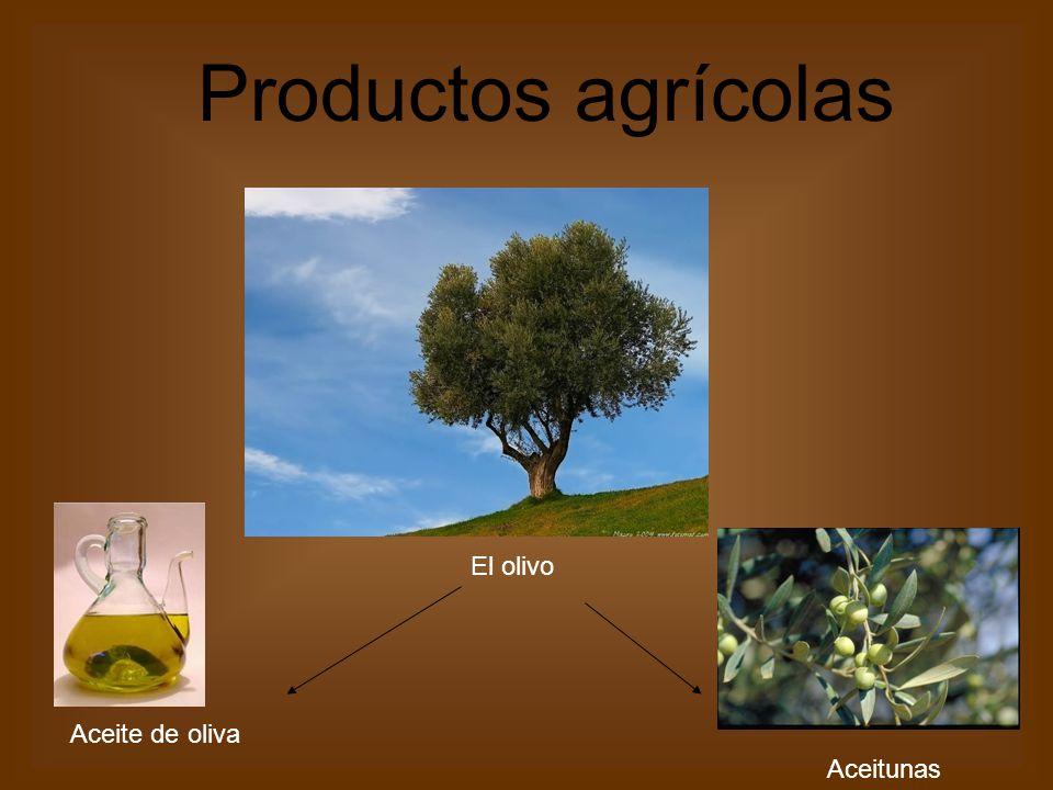 El olivo Aceite de oliva Aceitunas Productos agrícolas
