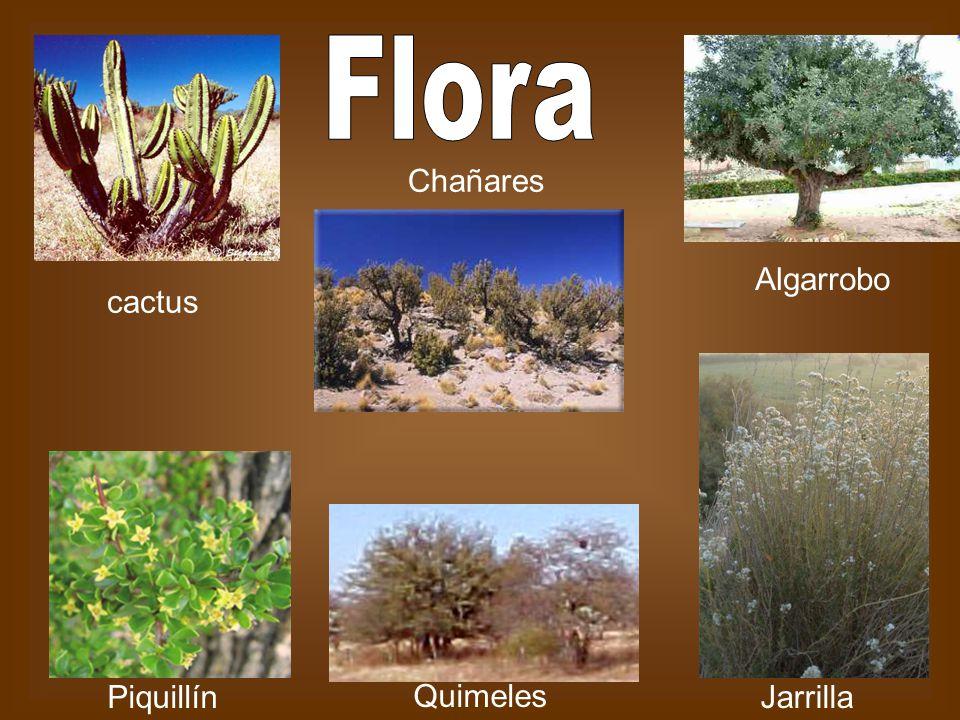 Algarrobo cactus Chañares JarrillaPiquillín Quimeles