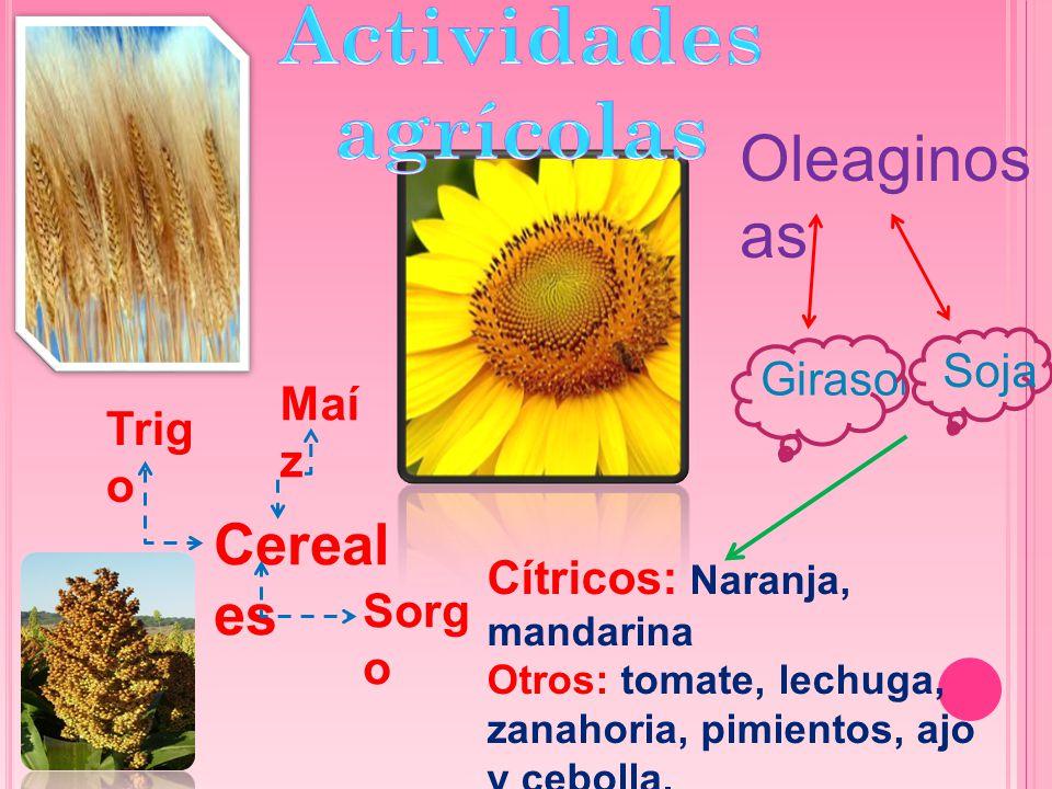 Cereal es Trig o Maí z Sorg o Oleaginos as Giraso l Soja Cítricos: Naranja, mandarina Otros: tomate, lechuga, zanahoria, pimientos, ajo y cebolla.