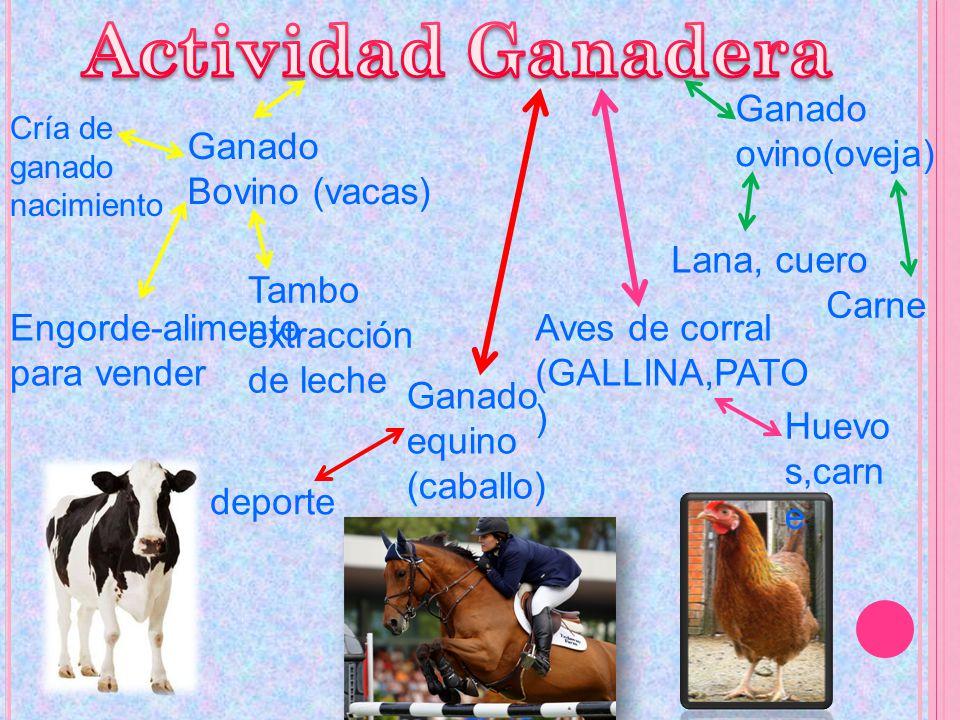 Ganado Bovino (vacas) Cría de ganado nacimiento Engorde-alimento para vender Tambo extracción de leche Ganado ovino(oveja) Lana, cuero Carne Aves de c