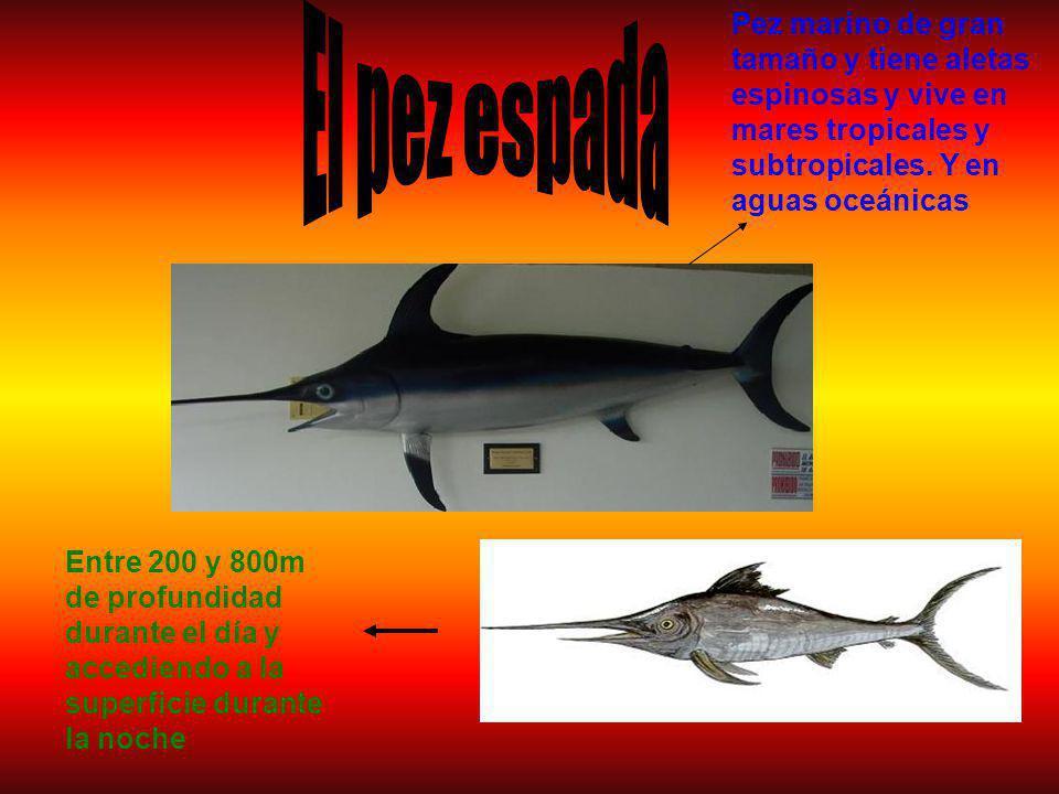 Pez marino de gran tamaño y tiene aletas espinosas y vive en mares tropicales y subtropicales.