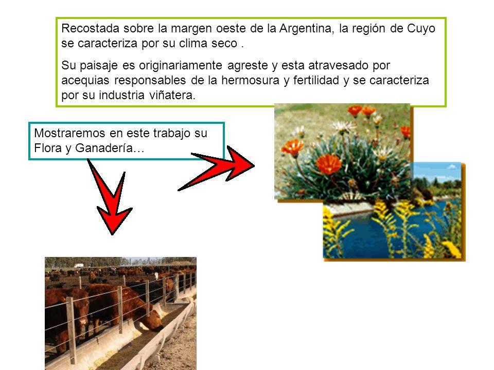 Recostada sobre la margen oeste de la Argentina, la región de Cuyo se caracteriza por su clima seco.