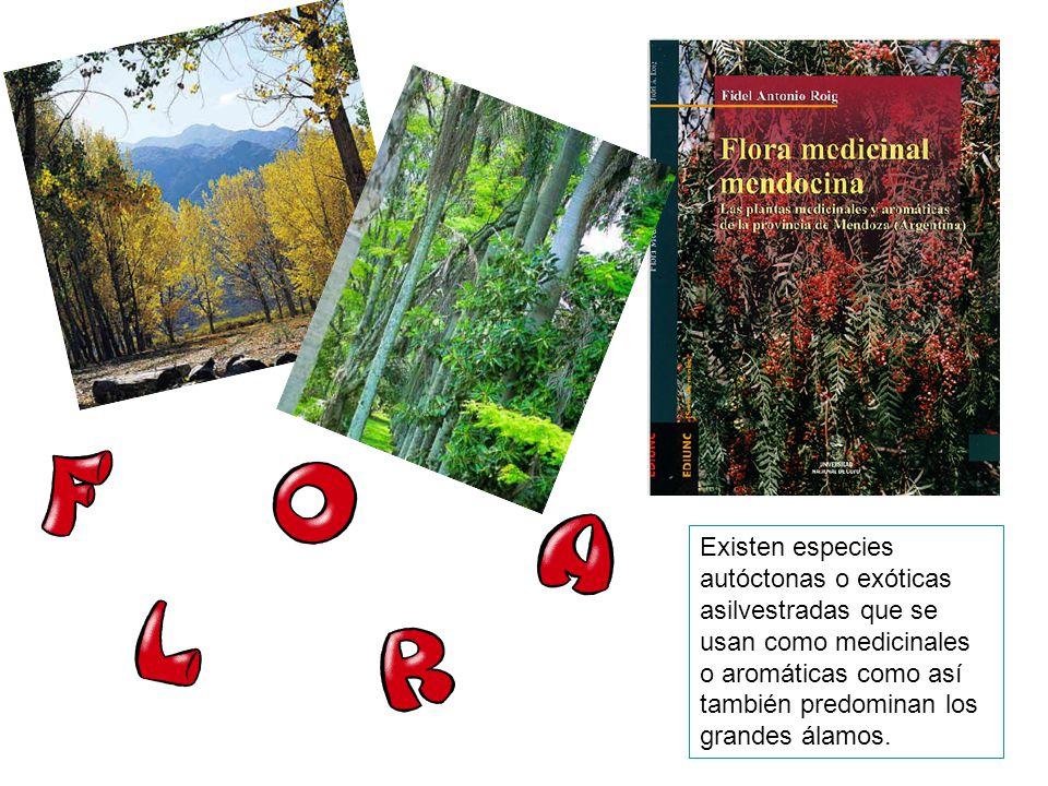 Existen especies autóctonas o exóticas asilvestradas que se usan como medicinales o aromáticas como así también predominan los grandes álamos.
