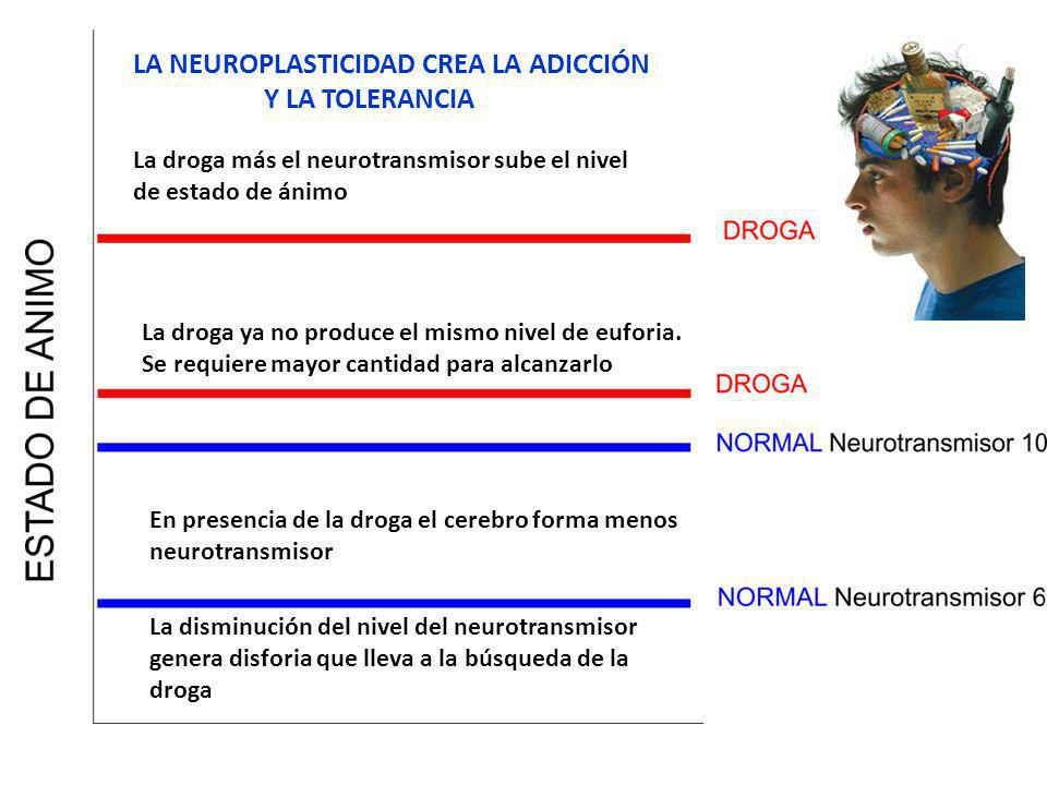 En presencia de la droga el cerebro forma menos neurotransmisor La disminución del nivel del neurotransmisor genera disforia que lleva a la búsqueda d