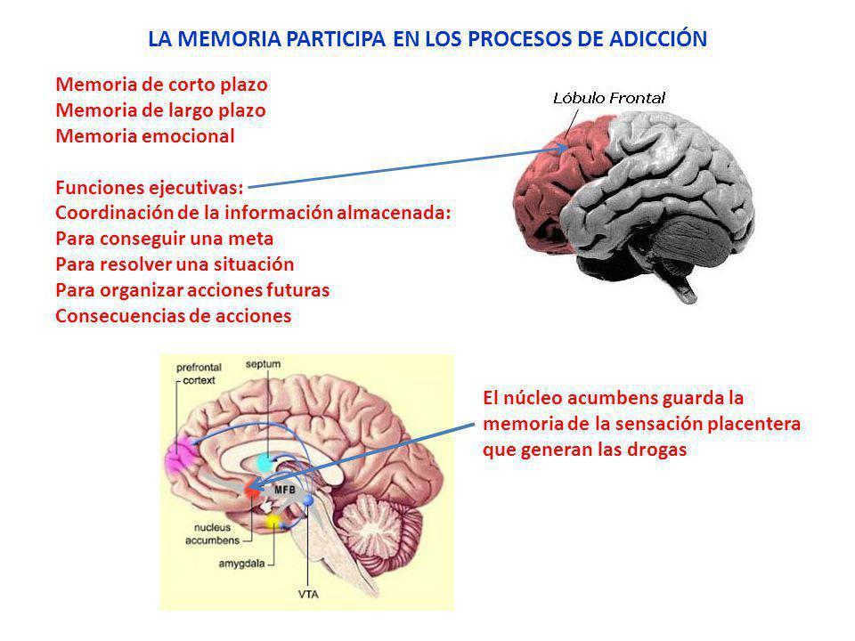 LA MEMORIA PARTICIPA EN LOS PROCESOS DE ADICCIÓN Memoria de corto plazo Memoria de largo plazo Memoria emocional Funciones ejecutivas: Coordinación de