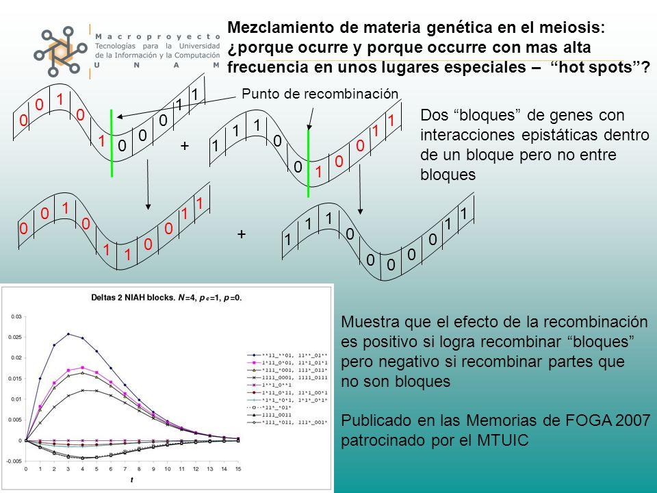 0 0 0 0 0 1 1 1 1 1 01 0 0 1 1 1 1 0 1 00 0 0 1 1 1 1 0 0 1 0 0 1 1 1 1 0 + + Punto de recombinación Mezclamiento de materia genética en el meiosis: ¿