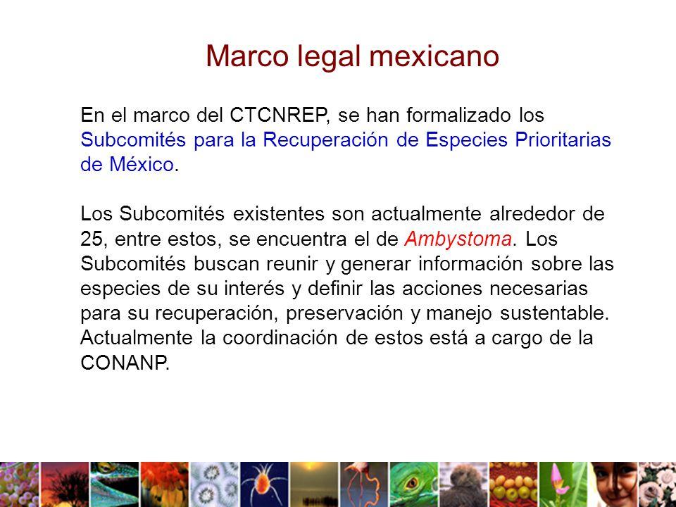 En el marco del CTCNREP, se han formalizado los Subcomités para la Recuperación de Especies Prioritarias de México.