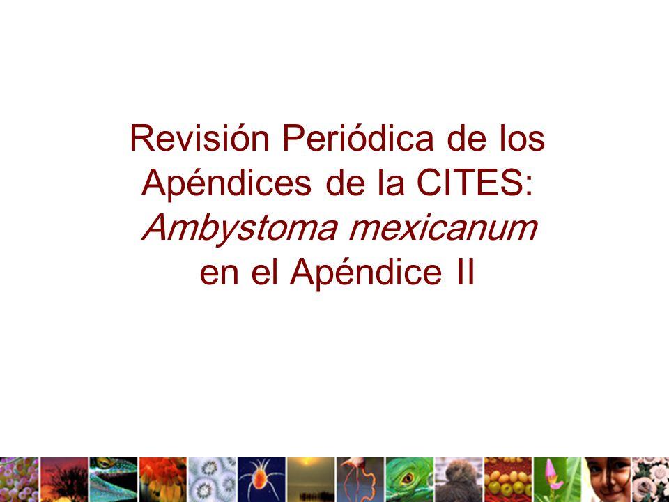 Revisión Periódica de los Apéndices de la CITES: Ambystoma mexicanum en el Apéndice II