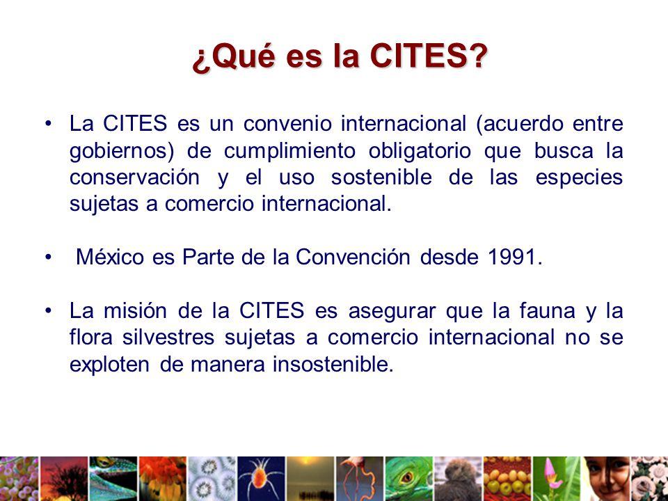 ¿Qué es la CITES.