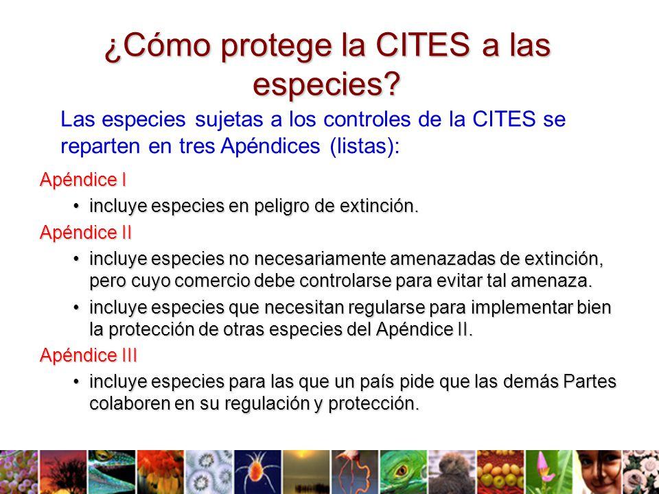 ¿Cómo protege la CITES a las especies.