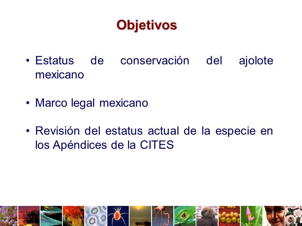 De manera complementaria, por iniciativa del Darwin Initiative Project del gobierno del Reino Unido, y con base en talleres técnicos en los que participaron diversos sectores de la sociedad, se elaboró un Plan de Acción Nacional para el Manejo y la Conservación del Ajolote en Xochimilco.