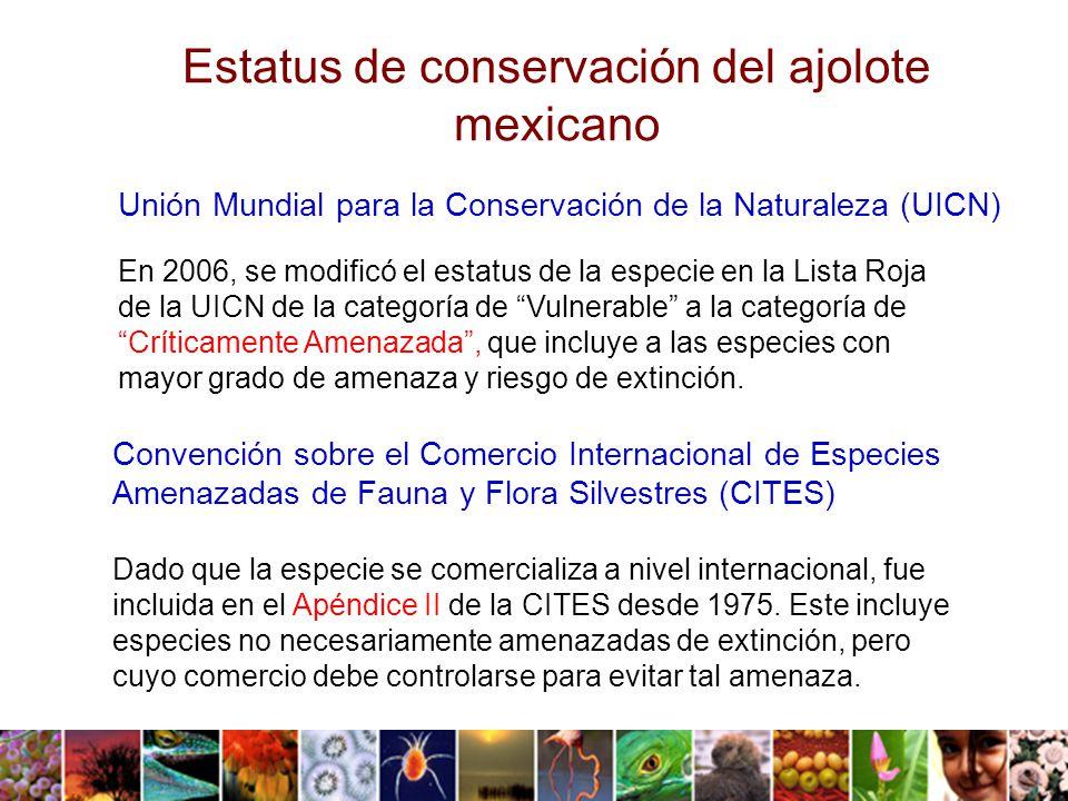 En 2006, se modificó el estatus de la especie en la Lista Roja de la UICN de la categoría de Vulnerable a la categoría de Críticamente Amenazada, que incluye a las especies con mayor grado de amenaza y riesgo de extinción.