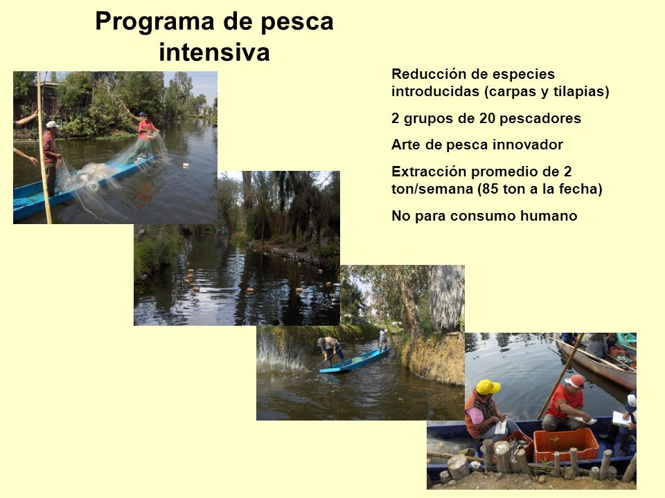 Programa de pesca intensiva Reducción de especies introducidas (carpas y tilapias) 2 grupos de 20 pescadores Arte de pesca innovador Extracción promed