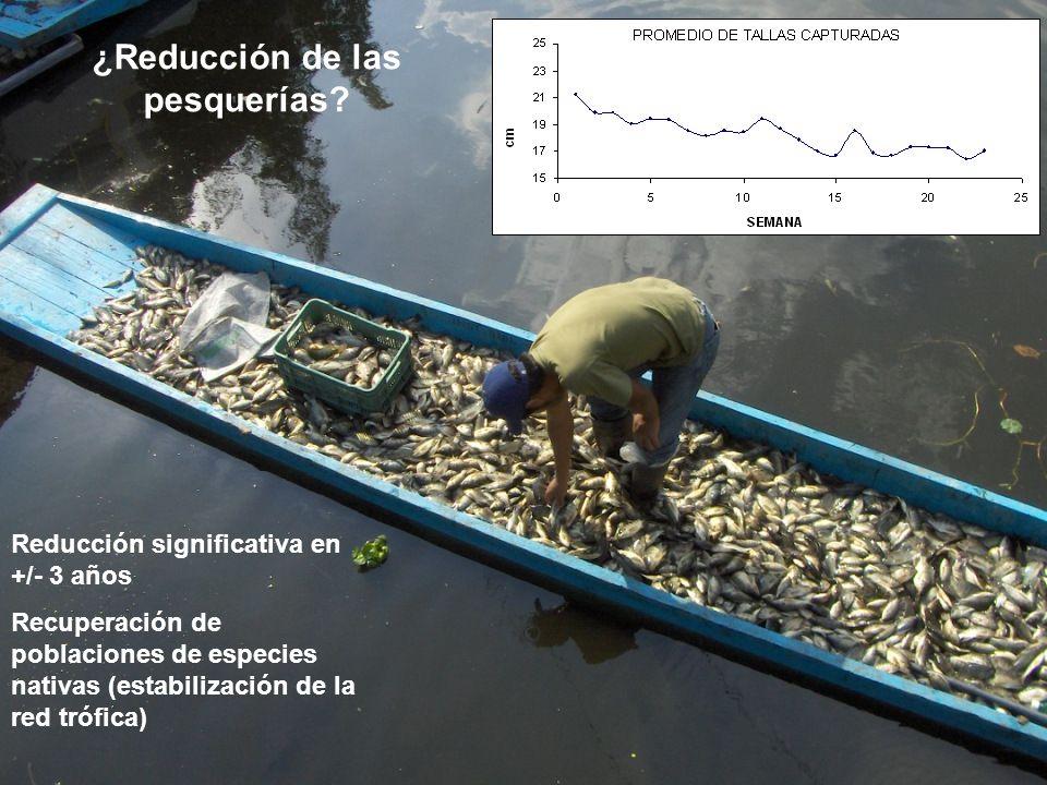 ¿Reducción de las pesquerías? Reducción significativa en +/- 3 años Recuperación de poblaciones de especies nativas (estabilización de la red trófica)