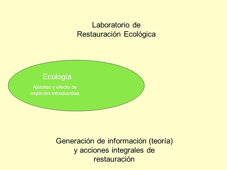 Ecología Investigación a nivel: Experimental Reducción de especies exóticas Análisis espaciales Estación de monitoreo Teoría en ecología a nivel: Poblaciones Comunidades Ecosistemas Objeto de estudio: Ajolotes Otras especies nativas Funcionamiento de los canales