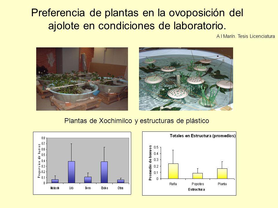Preferencia de plantas en la ovoposición del ajolote en condiciones de laboratorio. Plantas de Xochimilco y estructuras de plástico A I Marín. Tesis L