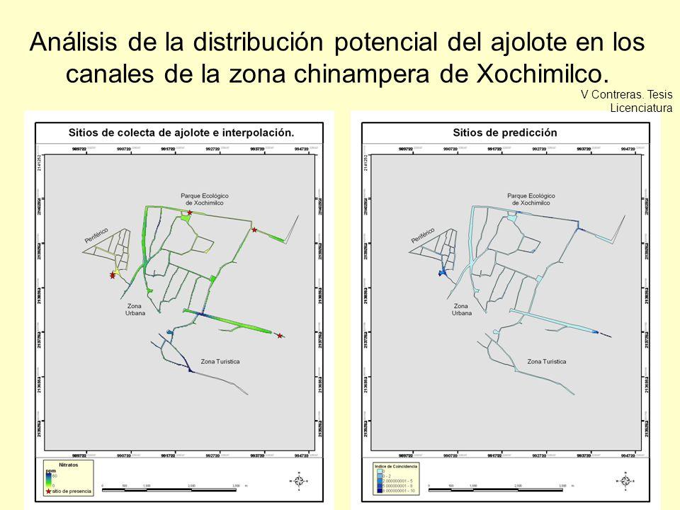 Análisis de la distribución potencial del ajolote en los canales de la zona chinampera de Xochimilco. V Contreras. Tesis Licenciatura