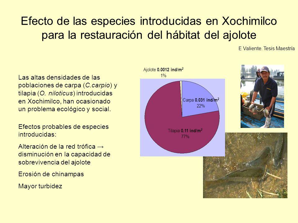 Modelo conceptual de la red trófica en Xochimilco Ajolote Carpa Charal Insectos acuáticos Godeido Zooplancton Anfípodo Ajolote Carpa Charal Tilapia Insectos acuáticos Fitoplancton Zooplancton Anfípodo Huevos y crías de ajolote Macrófitas acuáticas