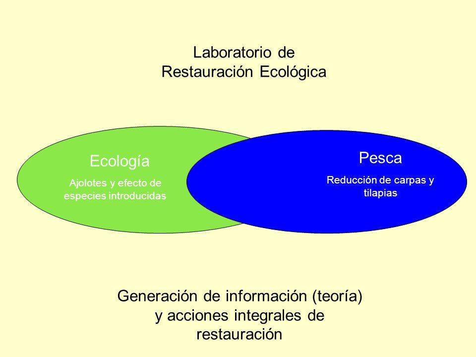 Laboratorio de Restauración Ecológica Generación de información (teoría) y acciones integrales de restauración Ecología Ajolotes y efecto de especies