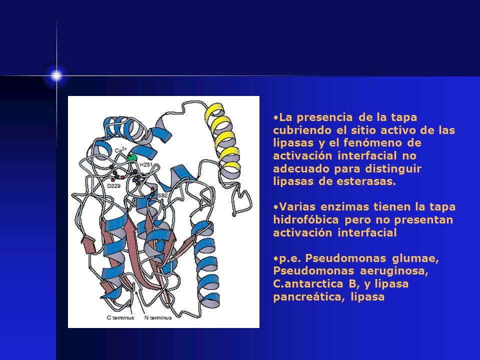 La presencia de la tapa cubriendo el sitio activo de las lipasas y el fenómeno de activación interfacial no adecuado para distinguir lipasas de estera