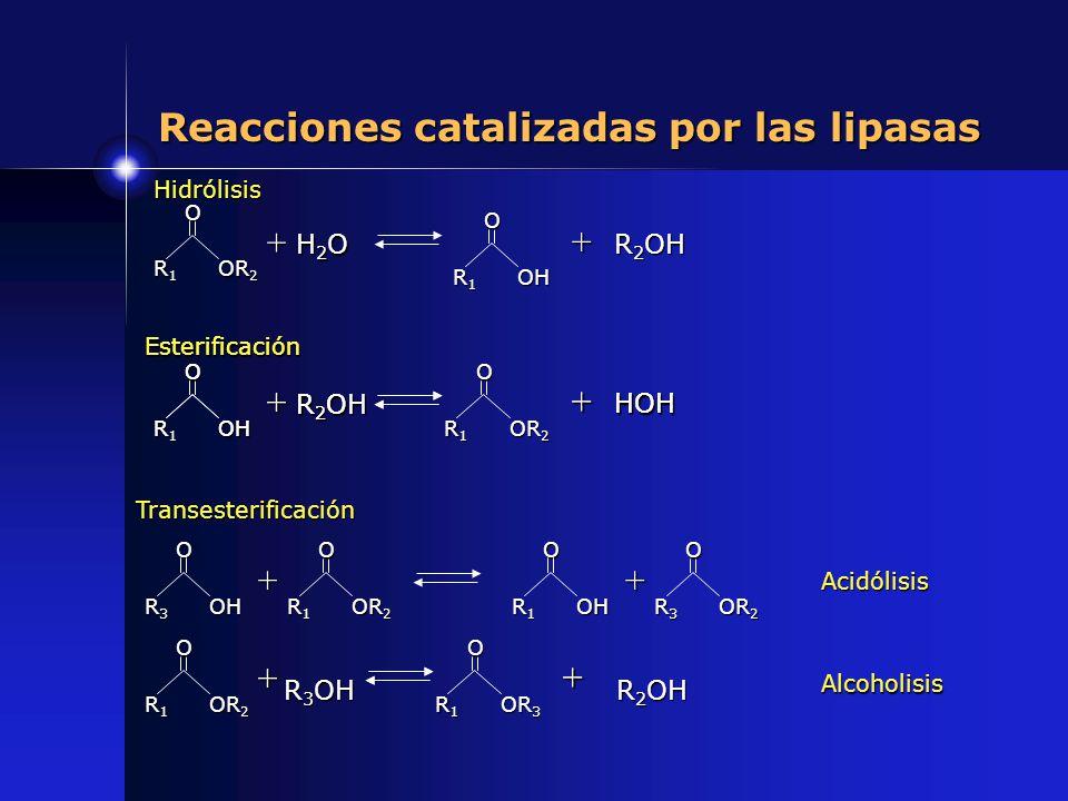 Reacciones catalizadas por las lipasas O R1R1R1R1 OR 2 + H2OH2OH2OH2O O R1R1R1R1OH + R 2 OH Hidrólisis O R1R1R1R1OH + R2OR2OR2OR2O + HOH Esterificació