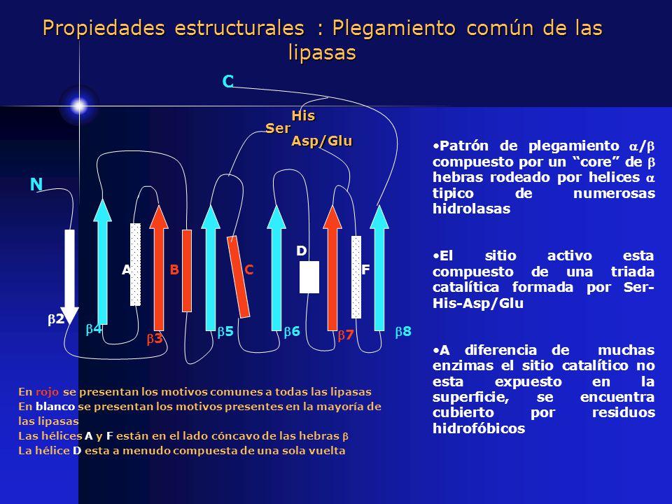 Propiedades estructurales : Plegamiento común de las lipasas Patrón de plegamiento / compuesto por un core de hebras rodeado por helices tipico de num
