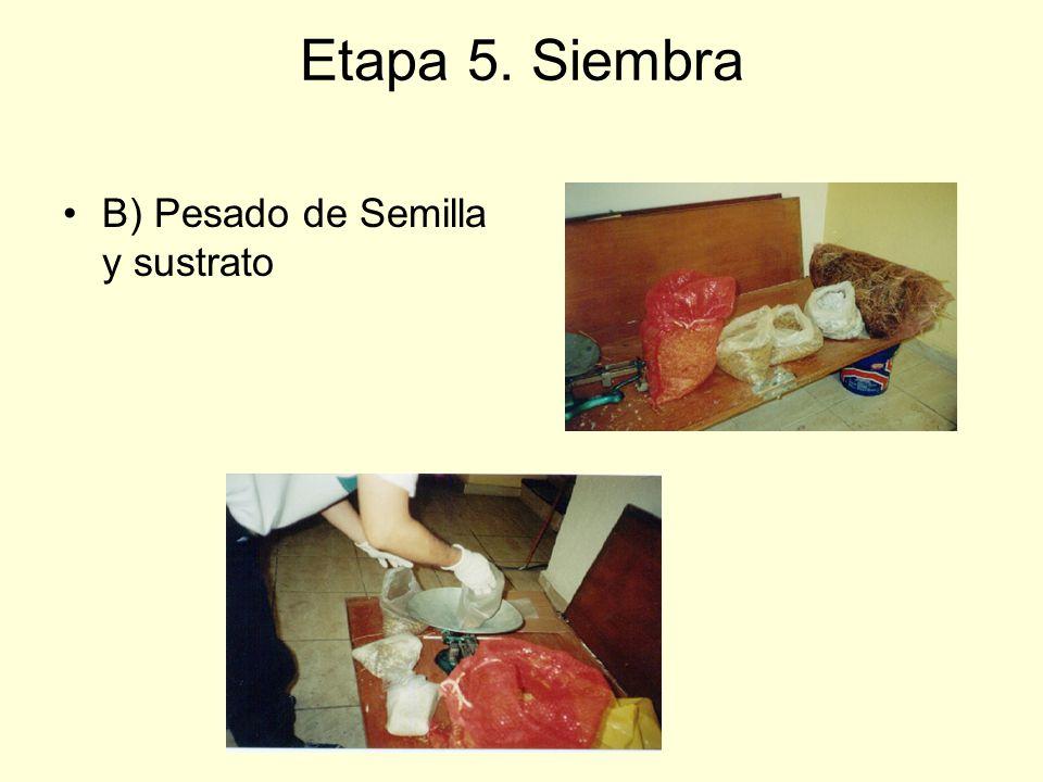 Etapa 5. Siembra B) Pesado de Semilla y sustrato