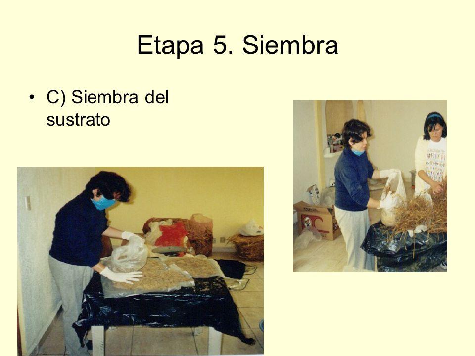 Etapa 5. Siembra C) Siembra del sustrato