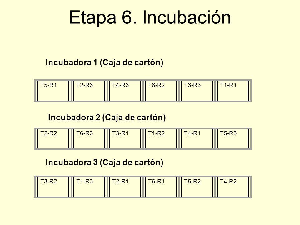 Etapa 6. Incubación Incubadora 1 (Caja de cartón) T5-R1T2-R3T4-R3T6-R2T3-R3T1-R1T2-R2T6-R3T3-R1T1-R2T4-R1T5-R3T3-R2T1-R3T2-R1T6-R1T5-R2T4-R2 Incubador