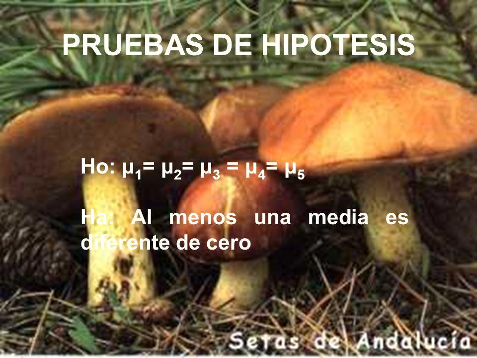 PRUEBAS DE HIPOTESIS Ho: μ 1 = μ 2 = μ 3 = μ 4 = μ 5 Ha: Al menos una media es diferente de cero