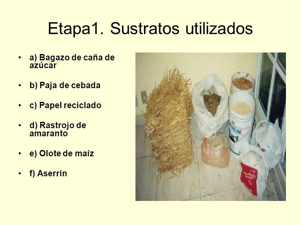 Etapa1. Sustratos utilizados a) Bagazo de caña de azúcar b) Paja de cebada c) Papel reciclado d) Rastrojo de amaranto e) Olote de maíz f) Aserrín